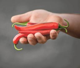 Im Gemüsegarten von Erhardt Naturkost 2