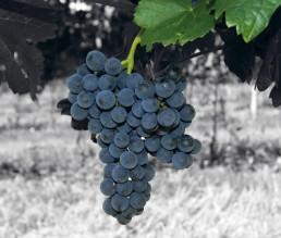 BioGourmet Hersteller Perlage Winery Produktionsfoto 2