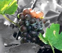 BioGourmet Hersteller Perlage Winery Produktionsfoto 3