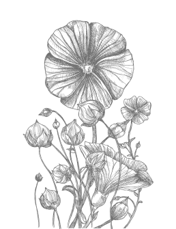 BioGourmet Feinkost-Kriterien