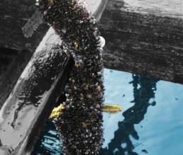 BioGourmet Bio-Miesmuscheln von Pan do Mar 2